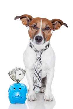 Dog with a piggy bank